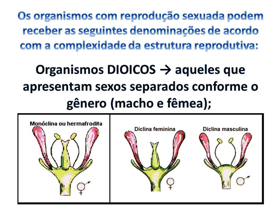 Os organismos com reprodução sexuada podem receber as seguintes denominações de acordo com a complexidade da estrutura reprodutiva: Organismos DIOICOS → aqueles que apresentam sexos separados conforme o gênero (macho e fêmea);