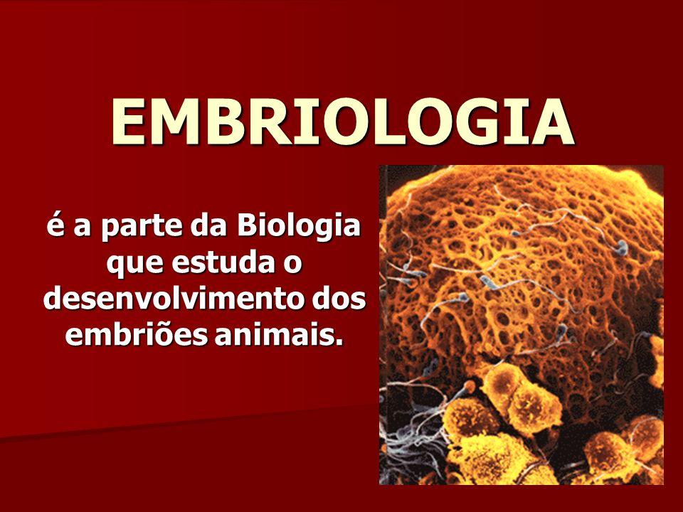 EMBRIOLOGIA é a parte da Biologia que estuda o desenvolvimento dos embriões animais.