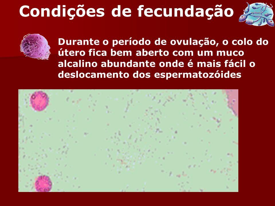 Condições de fecundação