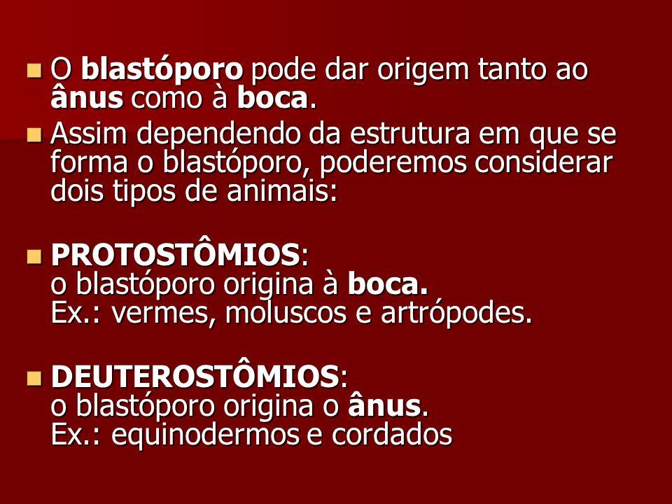 O blastóporo pode dar origem tanto ao ânus como à boca.