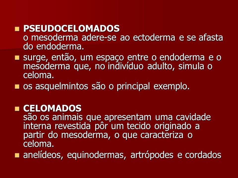 PSEUDOCELOMADOS o mesoderma adere-se ao ectoderma e se afasta do endoderma.