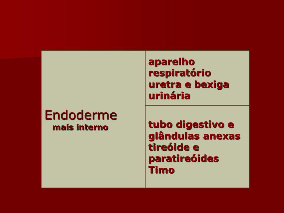 Endoderme aparelho respiratório uretra e bexiga urinária