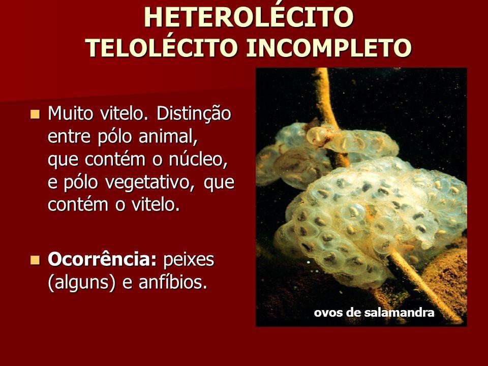 HETEROLÉCITO TELOLÉCITO INCOMPLETO