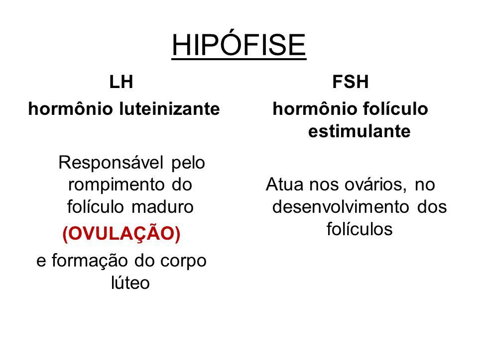 HIPÓFISE LH hormônio luteinizante Responsável pelo rompimento do folículo maduro (OVULAÇÃO) e formação do corpo lúteo