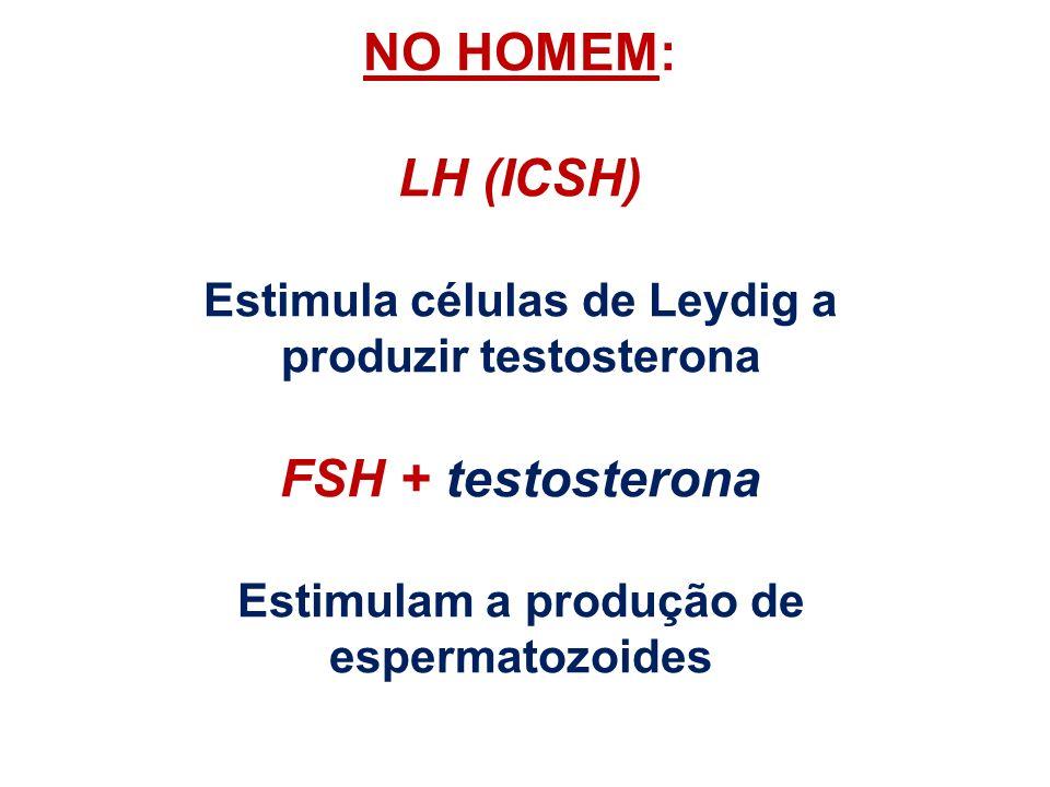NO HOMEM: LH (ICSH) FSH + testosterona