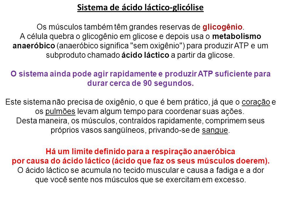 Sistema de ácido láctico-glicólise