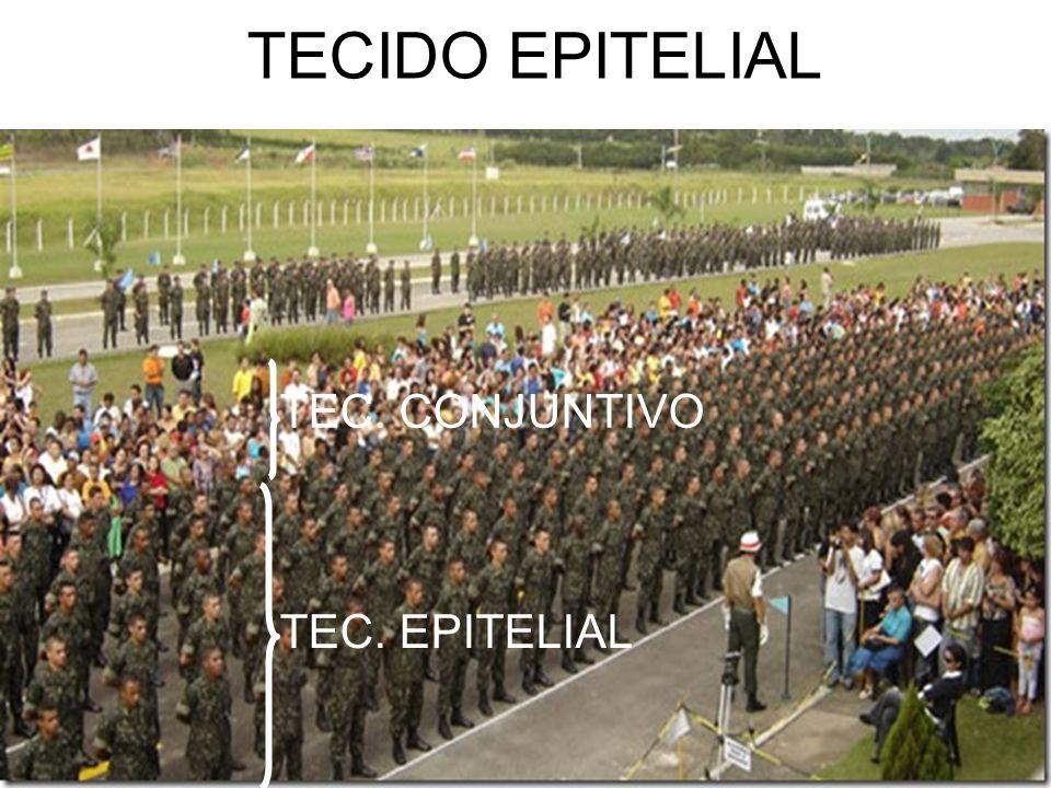TECIDO EPITELIAL TEC. CONJUNTIVO TEC. EPITELIAL