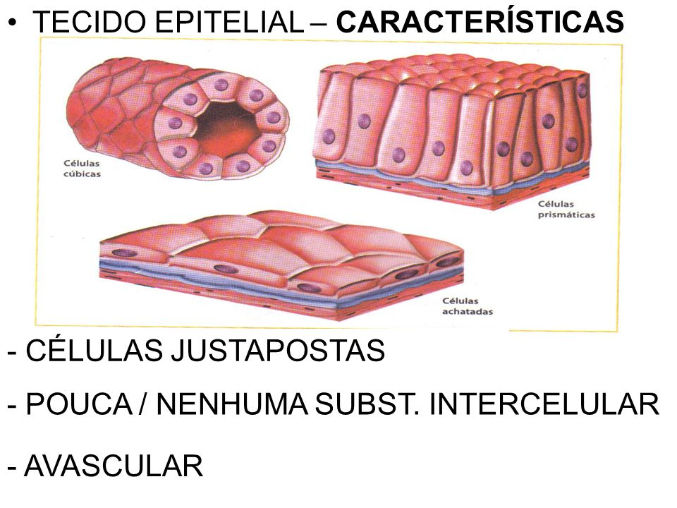 TECIDO EPITELIAL – CARACTERÍSTICAS