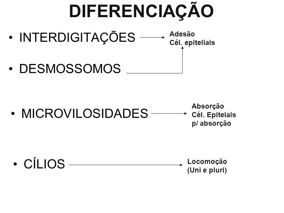 DIFERENCIAÇÃO INTERDIGITAÇÕES DESMOSSOMOS MICROVILOSIDADES CÍLIOS