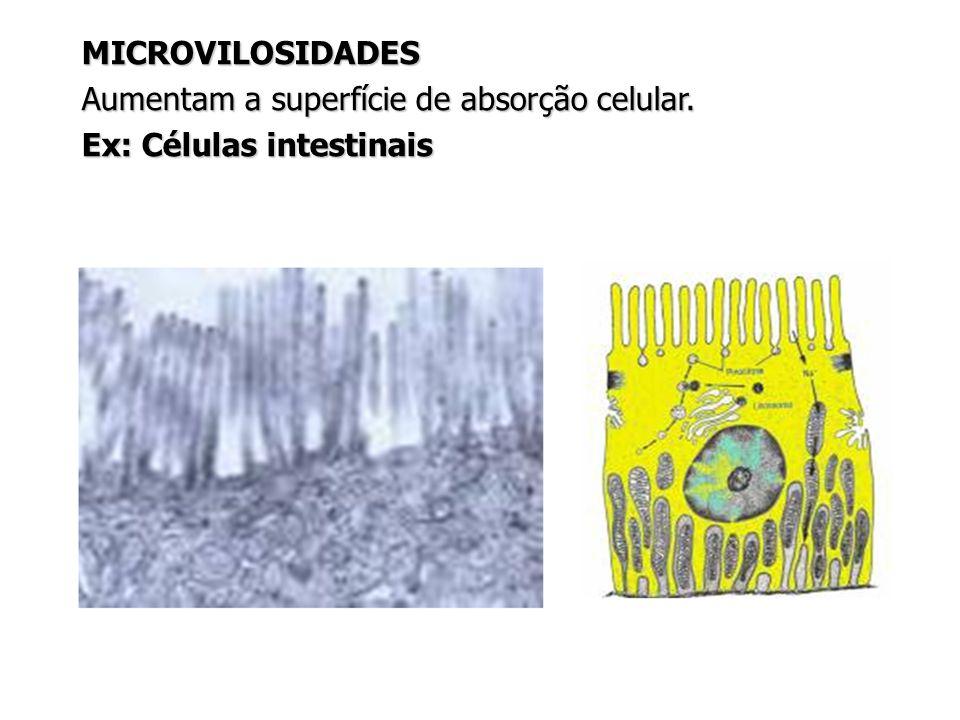 Aumentam a superfície de absorção celular. Ex: Células intestinais