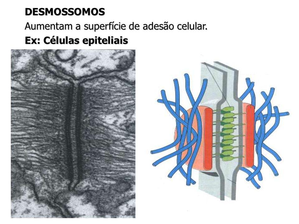 Aumentam a superfície de adesão celular. Ex: Células epiteliais