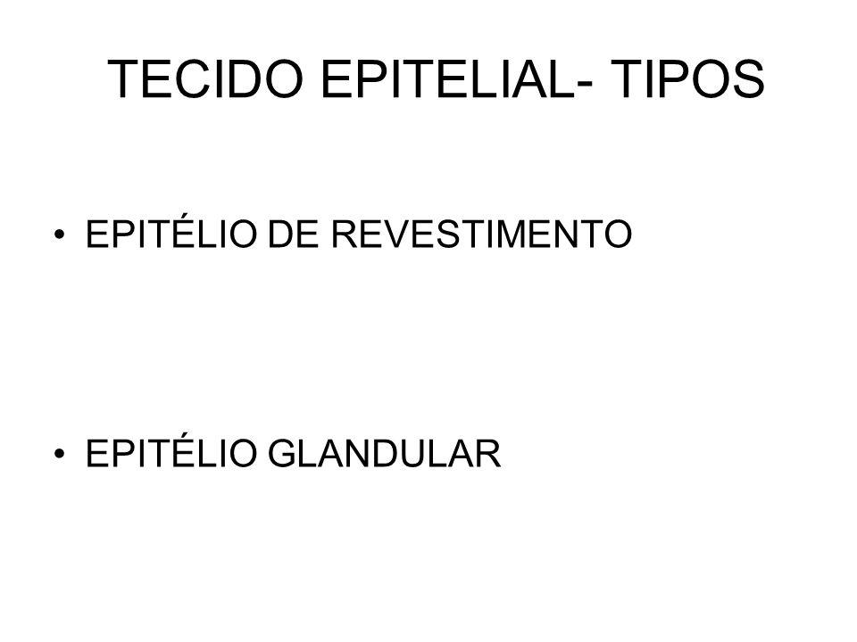 TECIDO EPITELIAL- TIPOS
