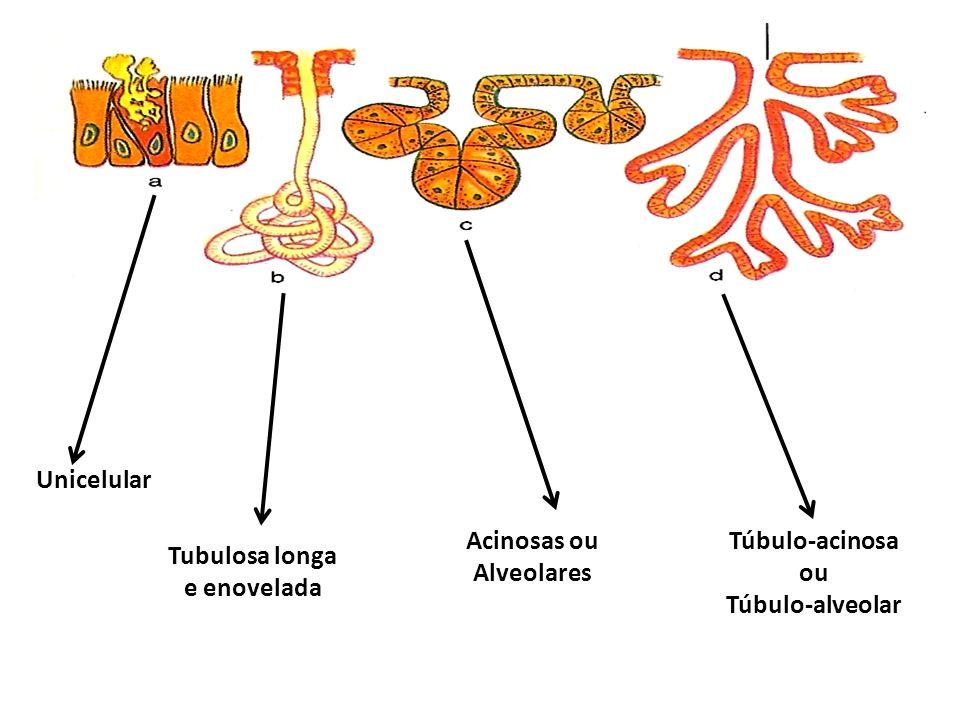 Acinosas ou Alveolares Tubulosa longa e enovelada