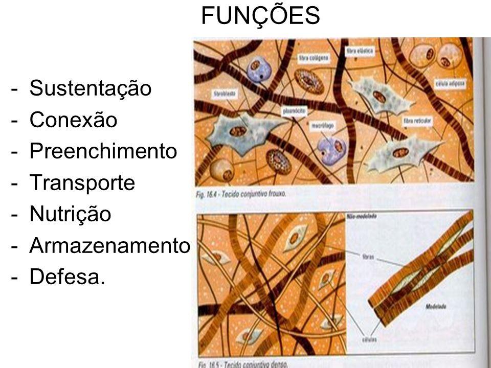 FUNÇÕES Sustentação Conexão Preenchimento Transporte Nutrição