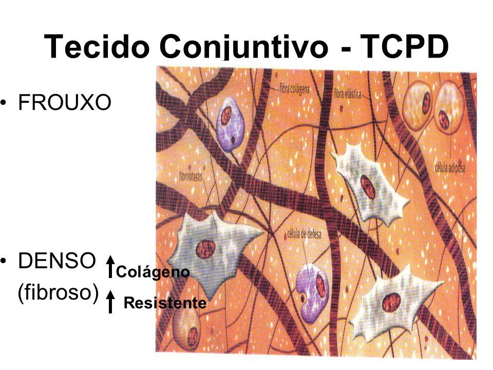 Tecido Conjuntivo - TCPD