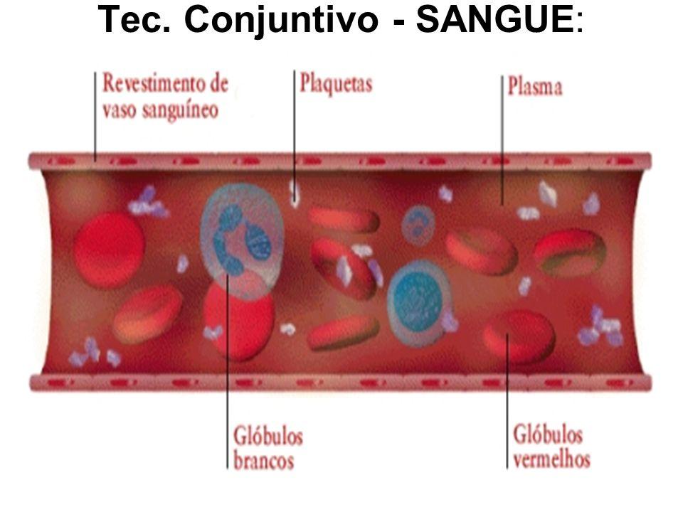 Tec. Conjuntivo - SANGUE: