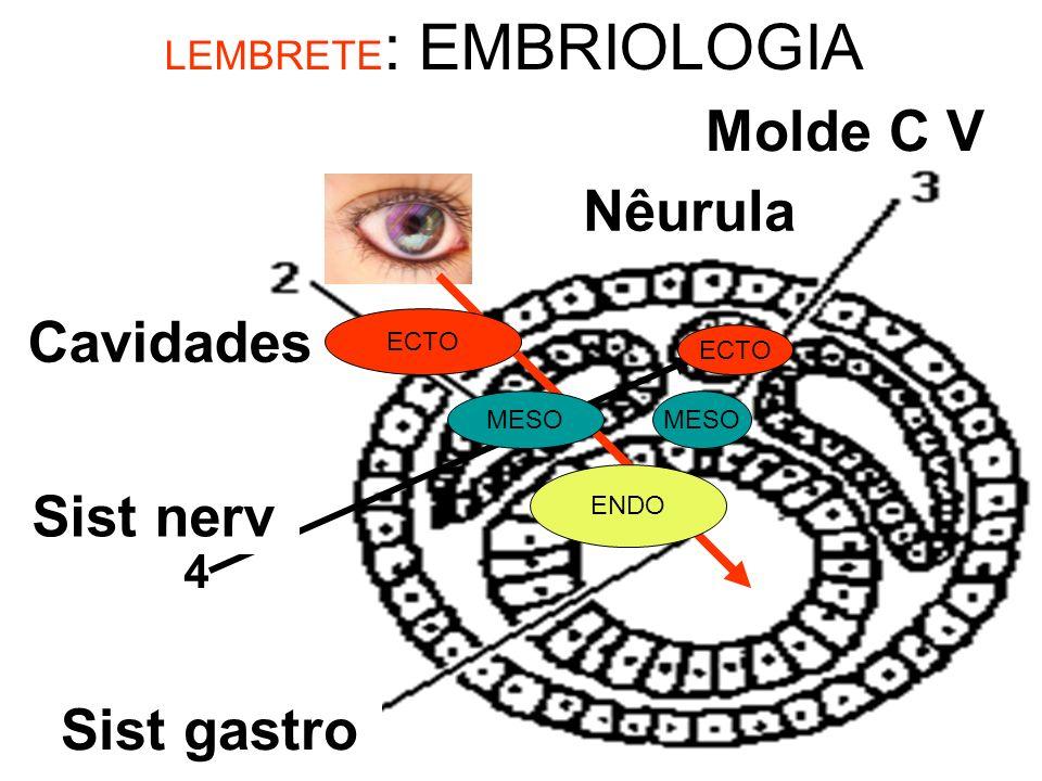 LEMBRETE: EMBRIOLOGIA