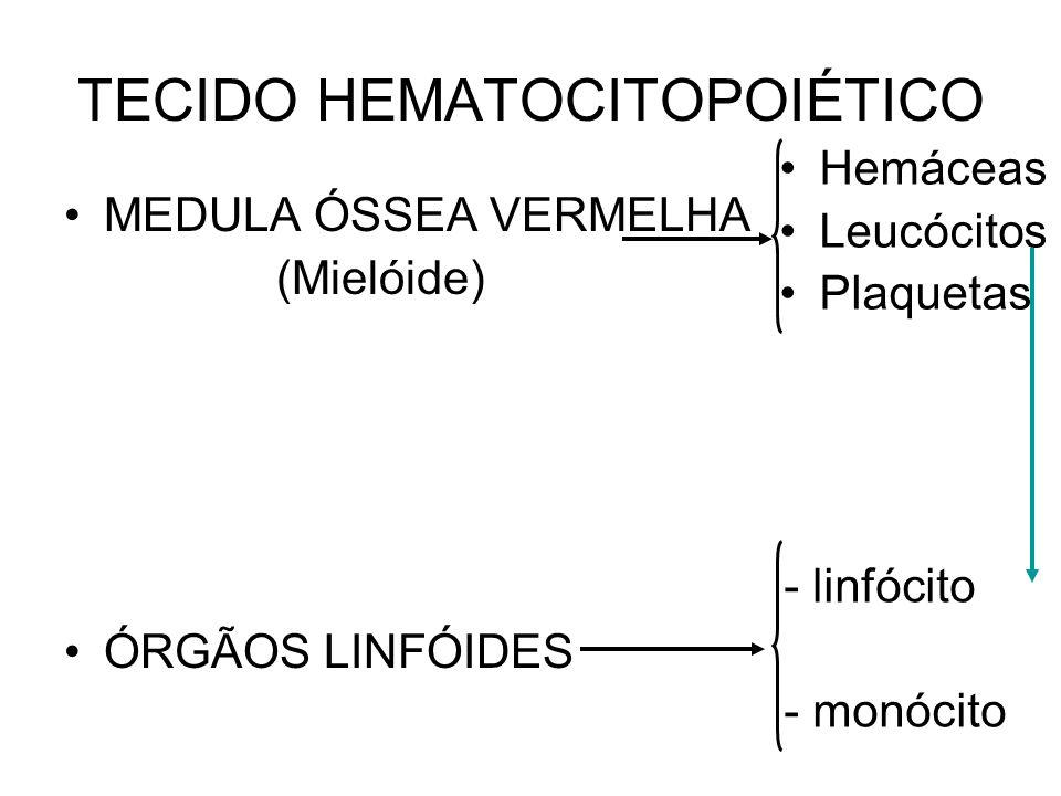 TECIDO HEMATOCITOPOIÉTICO