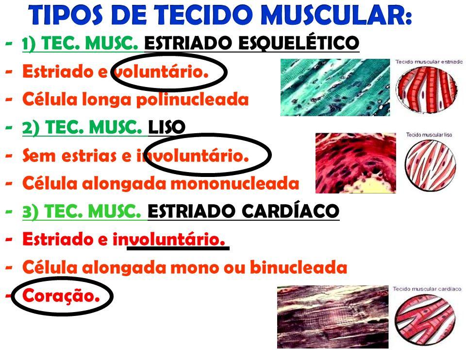 TIPOS DE TECIDO MUSCULAR: