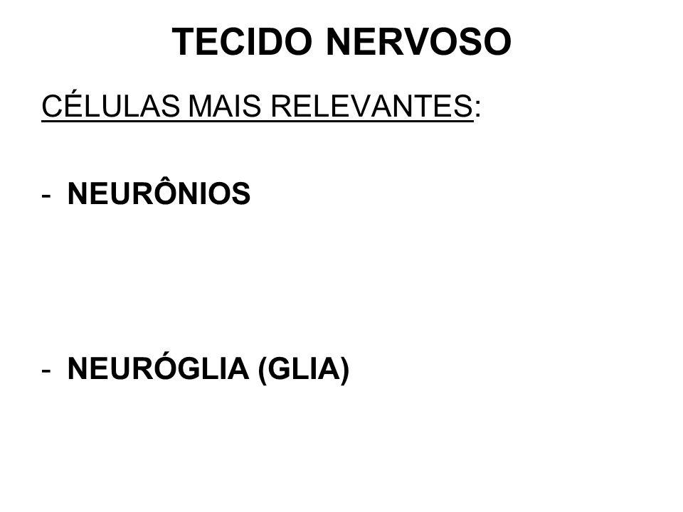 TECIDO NERVOSO CÉLULAS MAIS RELEVANTES: NEURÔNIOS NEURÓGLIA (GLIA)