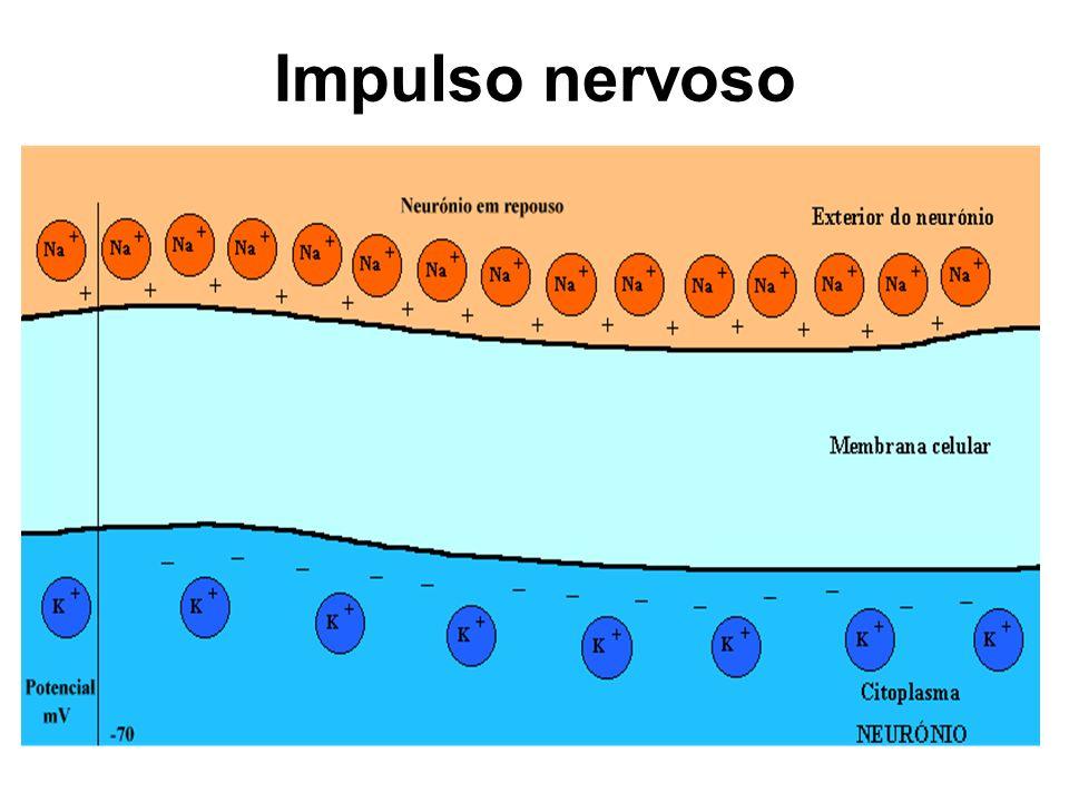 Impulso nervoso