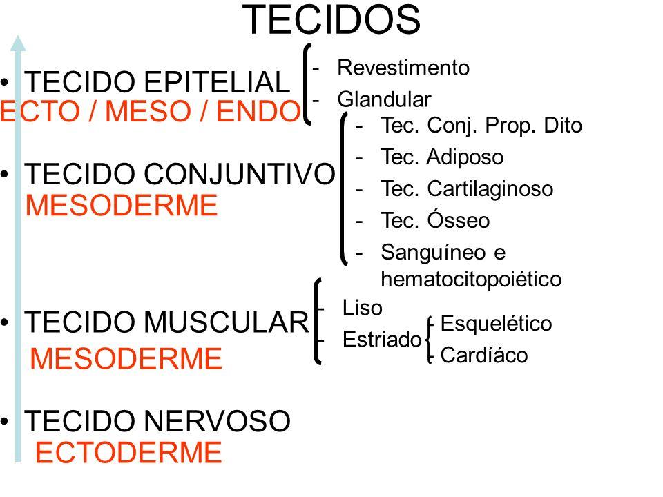 TECIDOS TECIDO EPITELIAL ECTO / MESO / ENDO TECIDO CONJUNTIVO