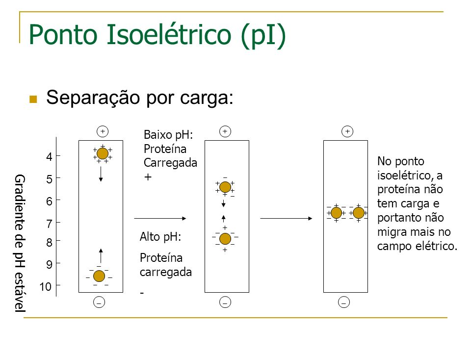 Ponto Isoelétrico (pI)
