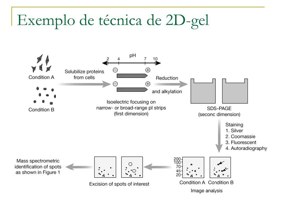 Exemplo de técnica de 2D-gel