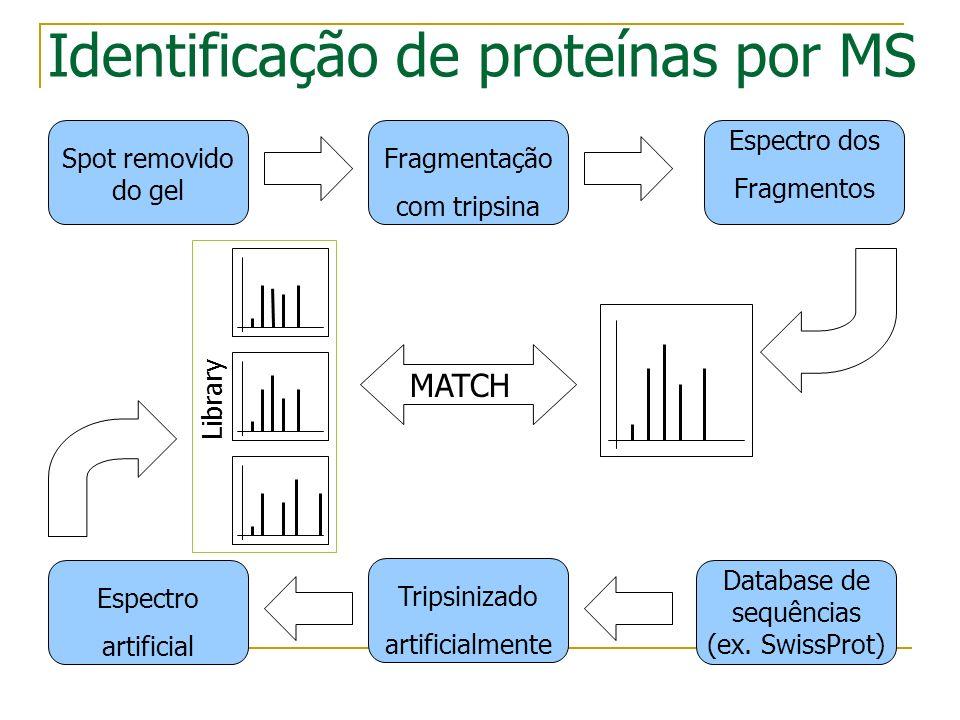 Identificação de proteínas por MS