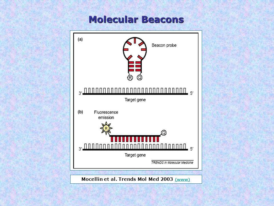 Mocellin et al. Trends Mol Med 2003 (www)