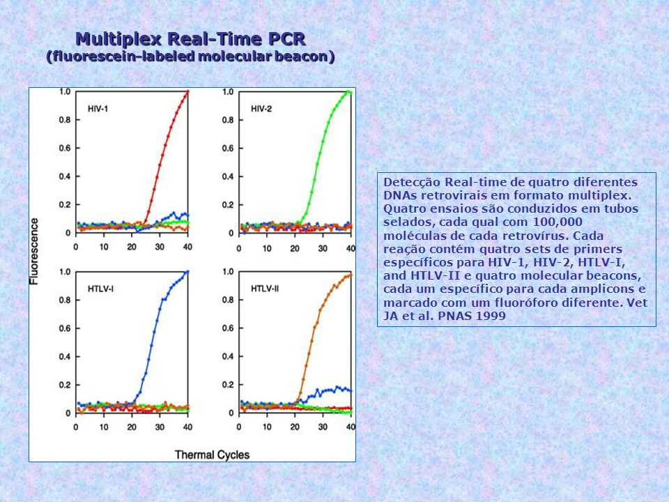Multiplex Real-Time PCR (fluorescein-labeled molecular beacon)