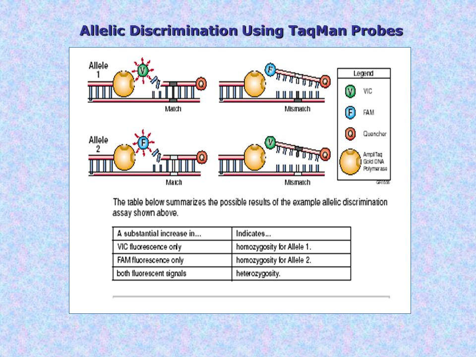 Allelic Discrimination Using TaqMan Probes