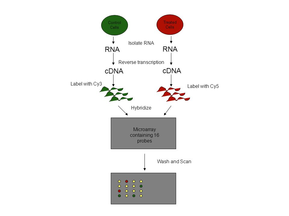 RNA cDNA Isolate RNA Reverse transcription Label with Cy3