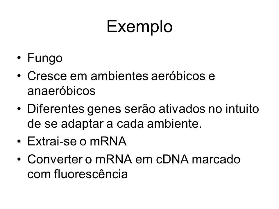 Exemplo Fungo Cresce em ambientes aeróbicos e anaeróbicos