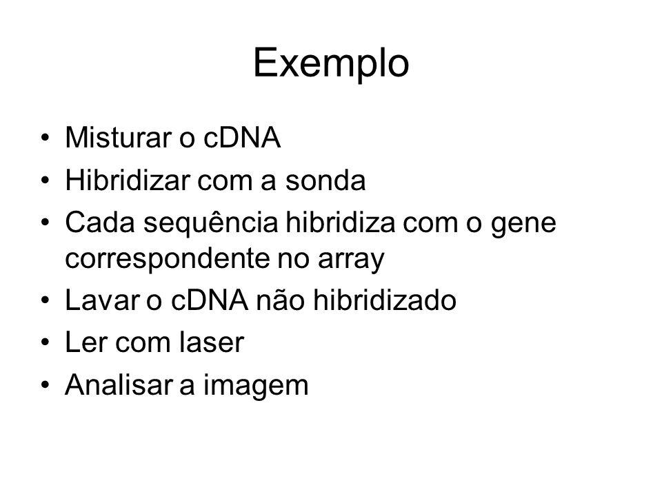 Exemplo Misturar o cDNA Hibridizar com a sonda