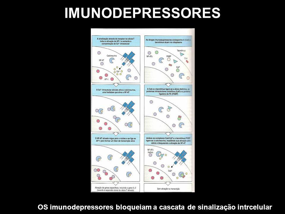 IMUNODEPRESSORES OS imunodepressores bloqueiam a cascata de sinalização intrcelular