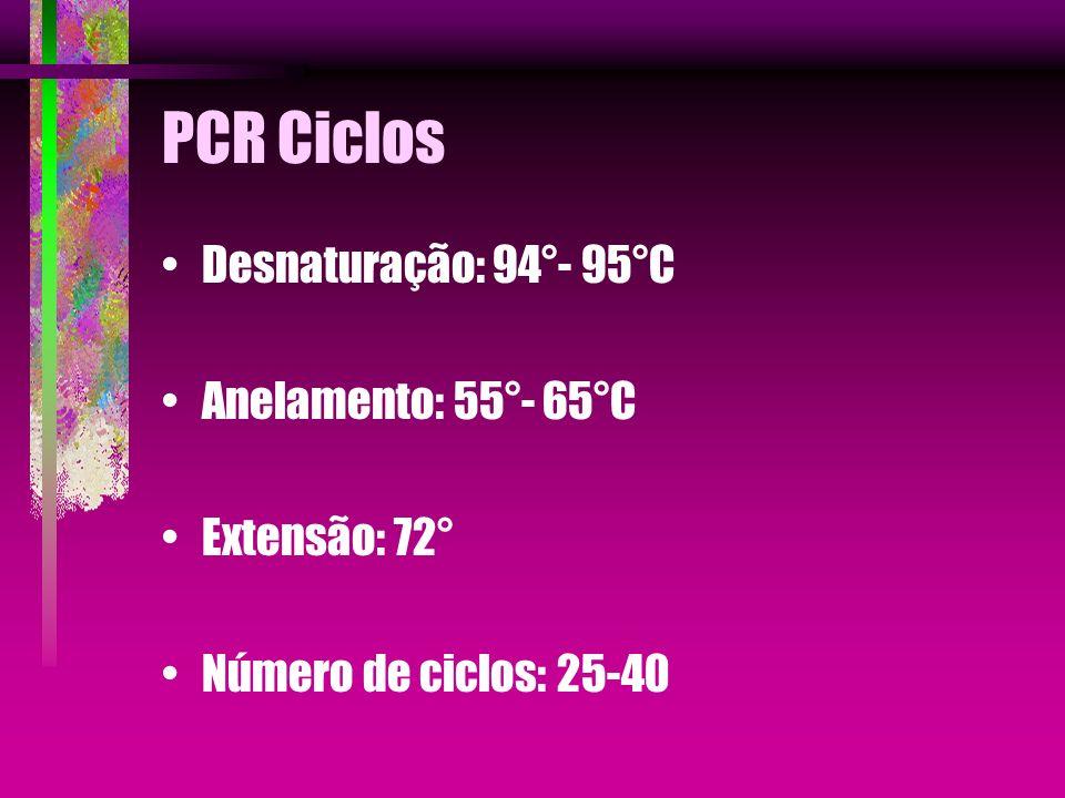 PCR Ciclos Desnaturação: 94°- 95°C Anelamento: 55°- 65°C Extensão: 72°