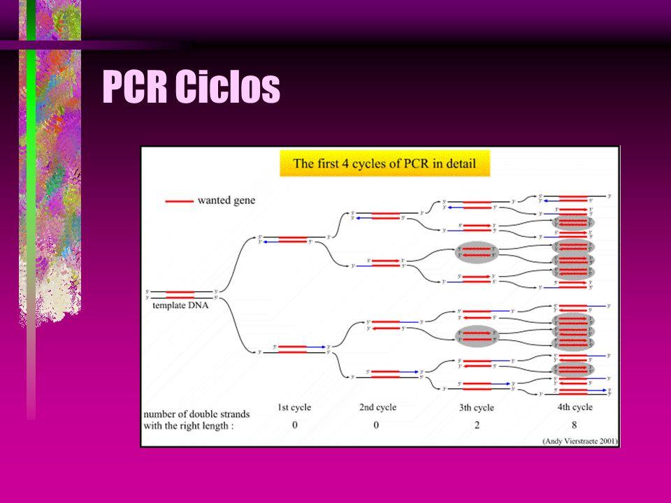PCR Ciclos