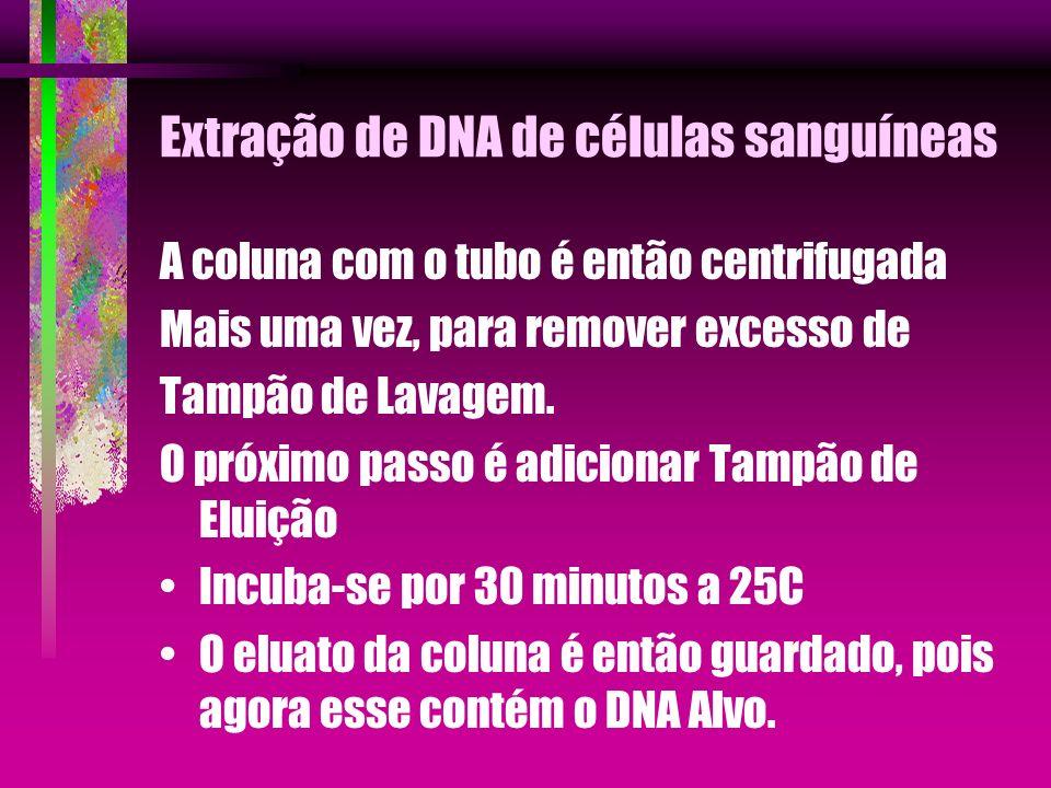 Extração de DNA de células sanguíneas