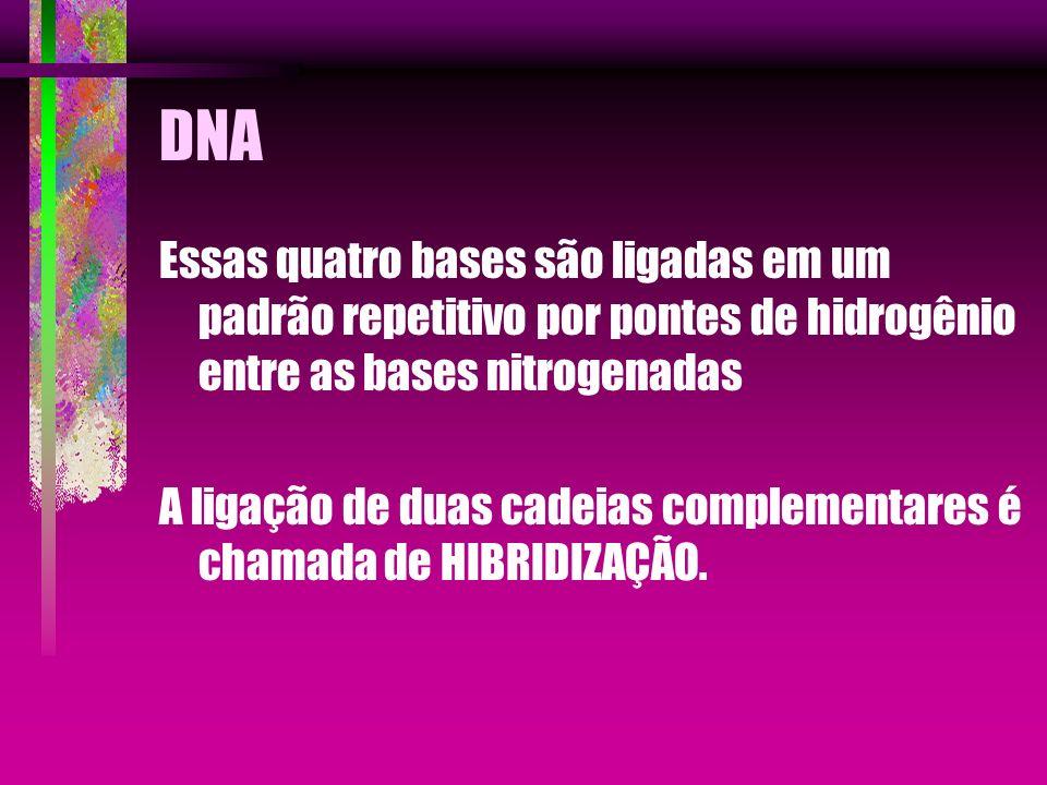 DNA Essas quatro bases são ligadas em um padrão repetitivo por pontes de hidrogênio entre as bases nitrogenadas.