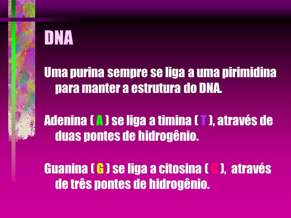 DNA Uma purina sempre se liga a uma pirimidina para manter a estrutura do DNA.