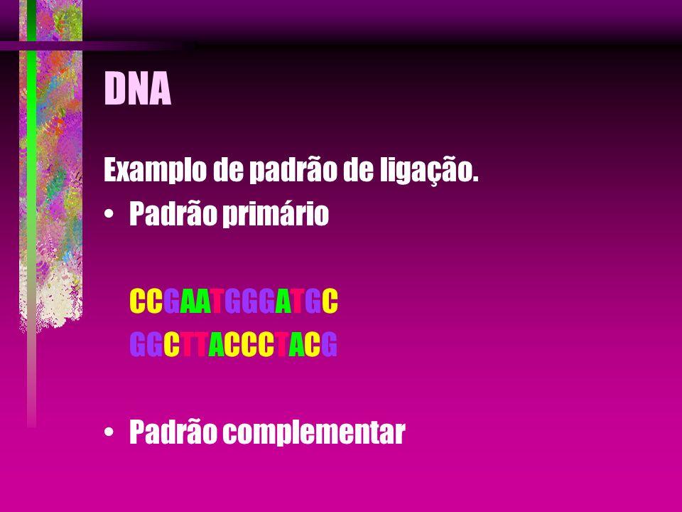 DNA Examplo de padrão de ligação. Padrão primário CCGAATGGGATGC