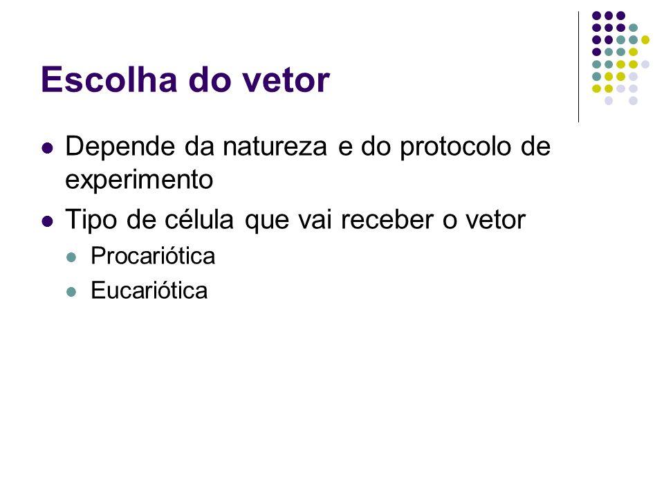 Escolha do vetor Depende da natureza e do protocolo de experimento
