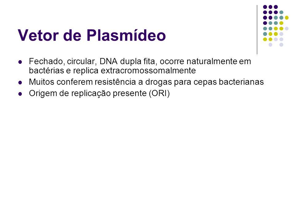 Vetor de Plasmídeo Fechado, circular, DNA dupla fita, ocorre naturalmente em bactérias e replica extracromossomalmente.
