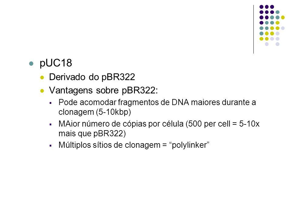 pUC18 Derivado do pBR322 Vantagens sobre pBR322: