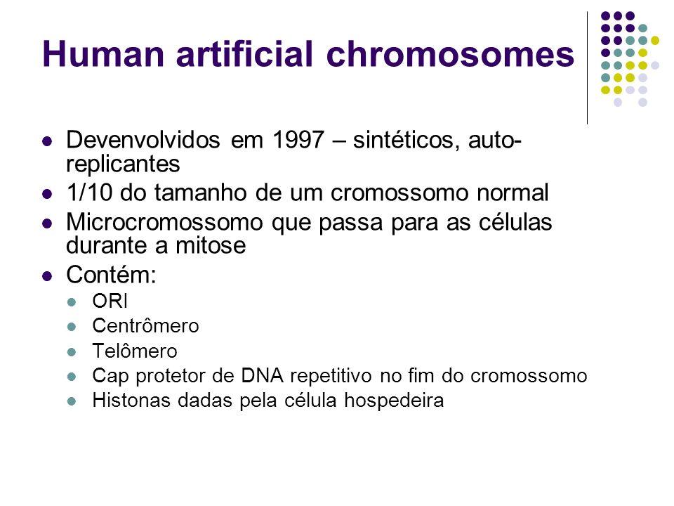 Human artificial chromosomes