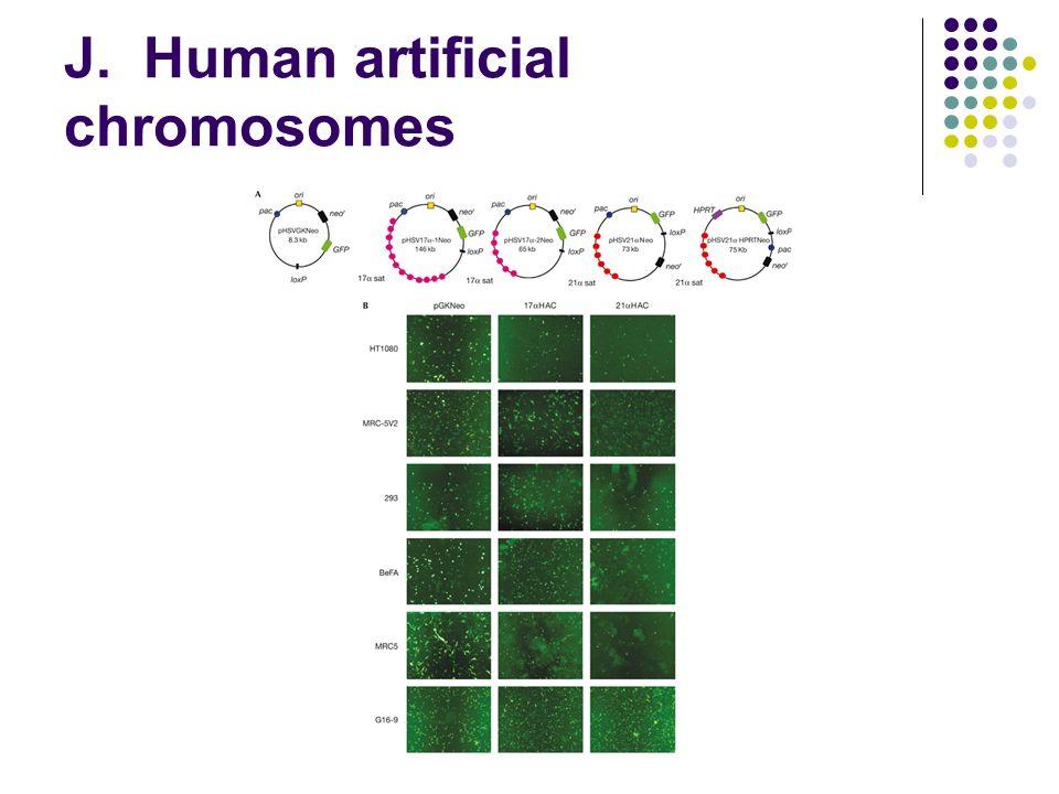 J. Human artificial chromosomes