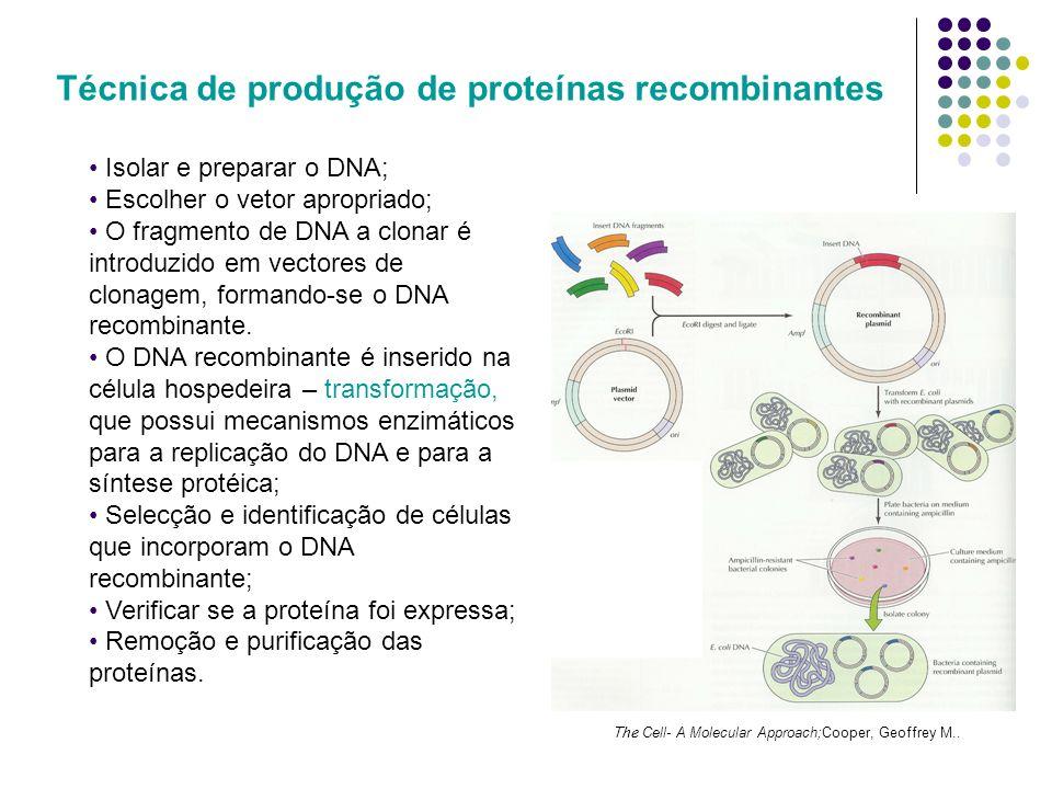 Técnica de produção de proteínas recombinantes