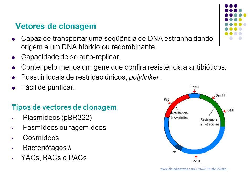 Vetores de clonagem Capaz de transportar uma seqüência de DNA estranha dando origem a um DNA híbrido ou recombinante.