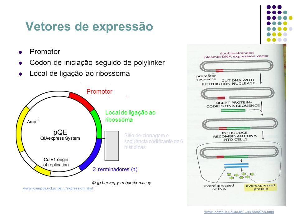 Vetores de expressão Promotor Códon de iniciação seguido de polylinker